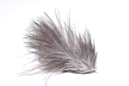 Gray feather isolated on white background. Macro