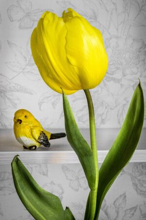 yellow tulip and yellow canary on white background