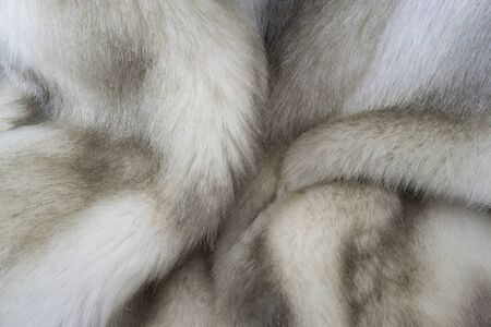 creative idea for background. real mink fur closeup Banque d'images - 148162797