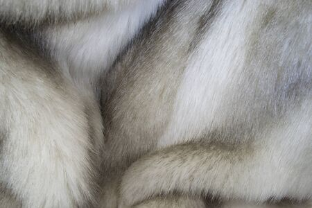 creative idea for background. real mink fur closeup Banque d'images - 148162816