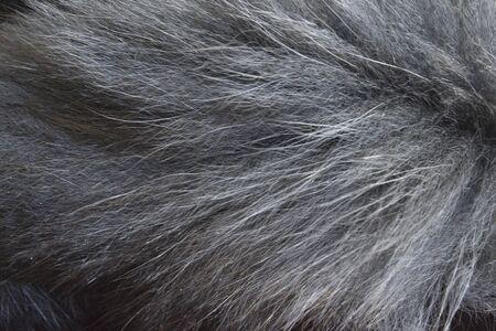 creative idea for background. gray fox fur closeup Banque d'images - 148166602