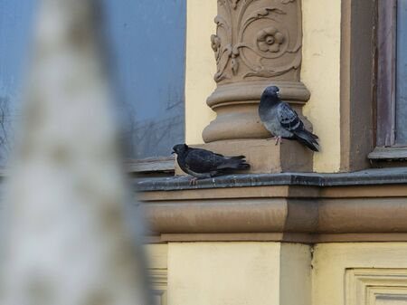 pigeons are sitting on the windowsill of an old building