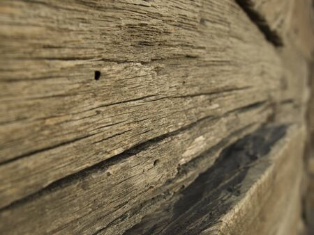 texture sawn old wood in the forest