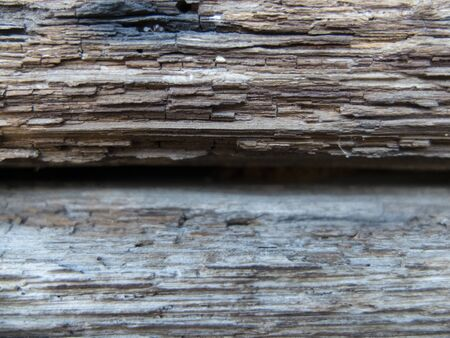 structure, texture of wood bark close up
