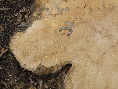 texture sawn old tree in the forest Banque d'images