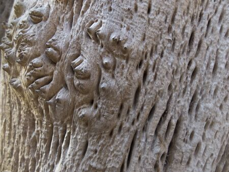 texture of an old exotic tree in the forest