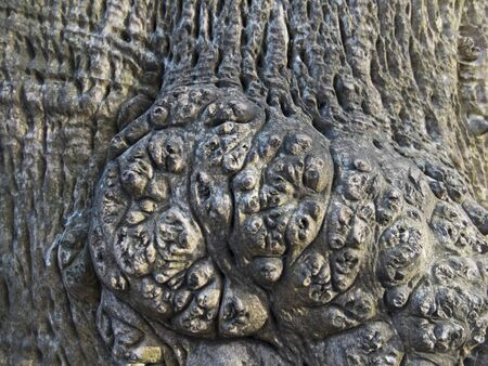texture of an old exotic tree in the forest, the root of the trunkold tree bark close up