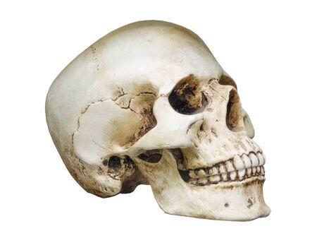 human skull bones closeup no background Zdjęcie Seryjne