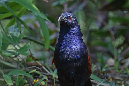 perched: Bird close up. Stock Photo
