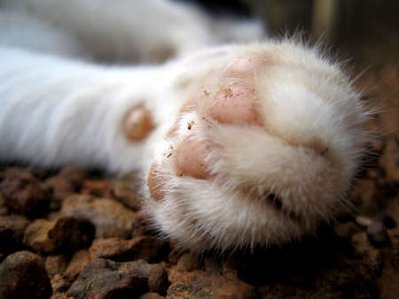leg of cat