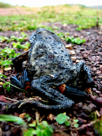 Dying toad Stock Photo