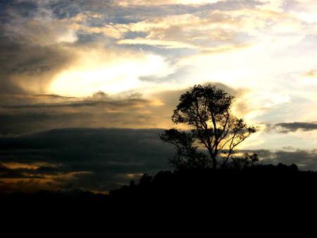 Sagoma dell'albero Archivio Fotografico - 90176062