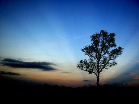 Albero silhouette e cielo blu Archivio Fotografico - 90176079