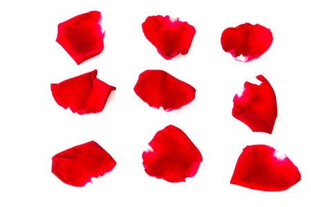 scattered in heart shaped: Petals of roses  isolated on a white background Stock Photo
