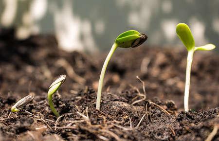 zaad op bodem - nieuw leven start-concept