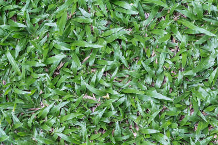 grass plot: Green grass seamless texture