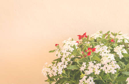 antique vase: Still life with flowers on wall background - vintage tone Stock Photo