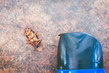Kill a cockroach Stock Photo