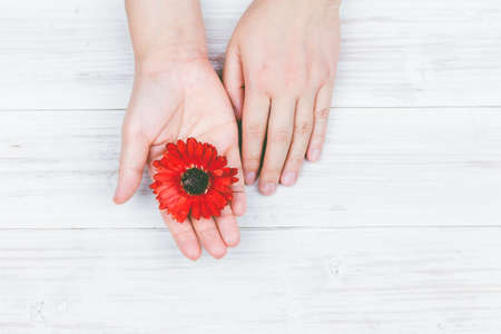 Beautiful hand with red flower on wooden table Stock Photo
