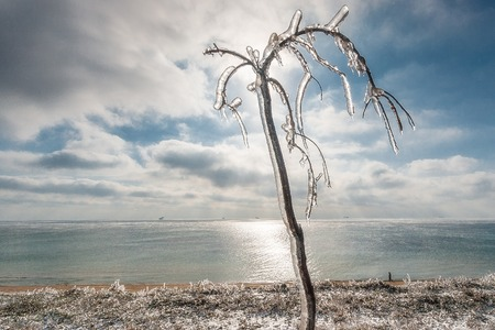 Winter landscape overlooking the sea. After freezing rain the sun came out. The tree in the ice against the sky.
