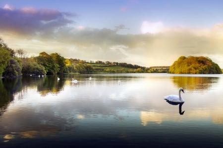 cisnes: Fotografía de un cisne en un lago en las montañas escocesas Foto de archivo