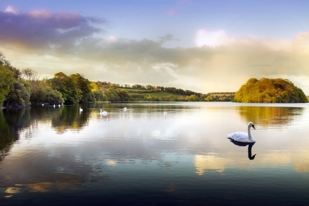 Picture of a Swan on a Lake in the Scottish Highlands Imagens - 18346307
