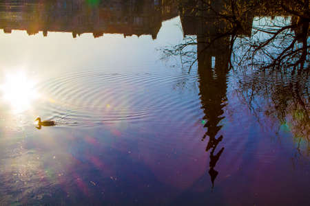 A duck swimming in the sunset in Perth Scotland photo