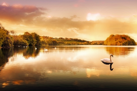 Picture of a Swan on a Lake in the Scottish Highlands Stock Photo - 18371637