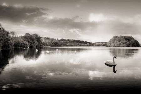 Picture of a Swan on a Lake in the Scottish Highlands Stock Photo - 18375326