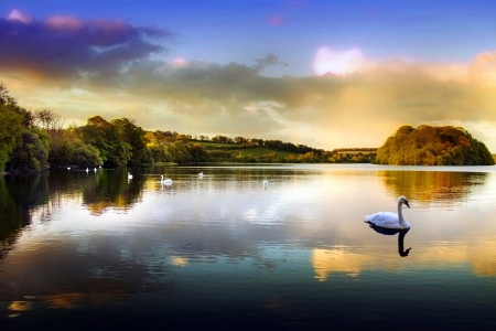 Picture of a Swan on a Lake in the Scottish Highlands