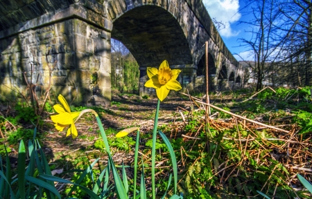 bluer: A shot of a daffodil in the Sping