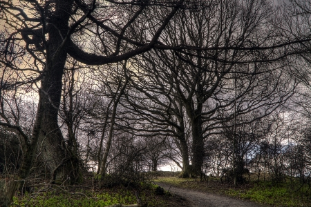 A moody shot of trees in Perth Scotland photo