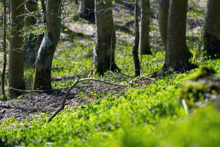A shot of fresh spring woodland in Perth Scotland photo