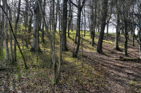 A shot of a woodland area in Perth Scotland photo