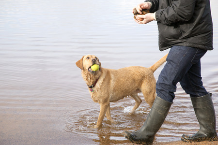 house trained: Man walking dog in Scottish Loch