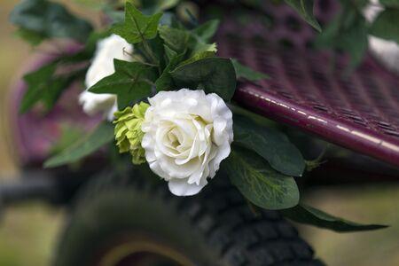 horse cart: Shot of a pretty Flower on horse Cart