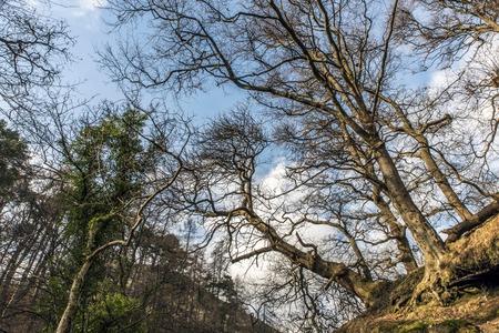 Overhanging tree conopy in Alva Glen Scotland