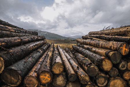 Close shot of stacked logs