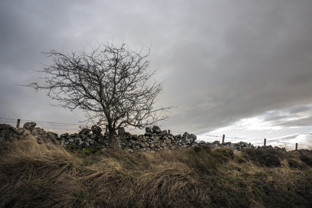 Tree at the edge of a field