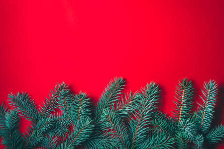 Fir branches on red background. Christmas wallpaper. Flat lay, copy space.