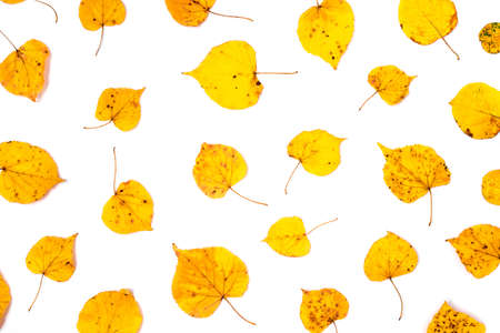 Autumn pattern made of yellow leaves on white background. Flat lay, top view.