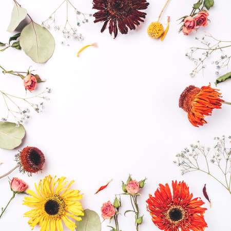 Frame of dry flowers on white background. Flat lay, top view. Copy space for text. Standard-Bild