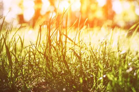 Frisches Frühlingsgras in den Sonnenstrahlen. Nahaufnahme.