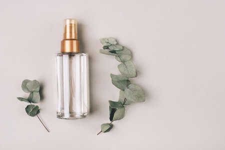 A bottle with a cosmetic product for skin care. Natural ingredients, eucalyptus. The concept of natural cosmetics. Banque d'images