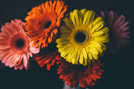Beautiful bouquet of gerberas of different colors on a black background. Banner with copy space for text.