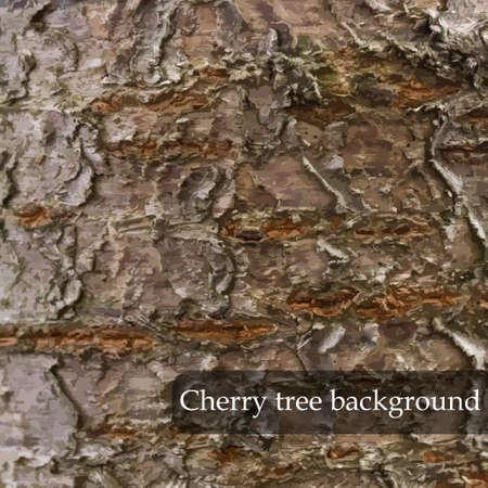 cherry wood: Wood texture. Cherry tree background. Vector illustration Illustration