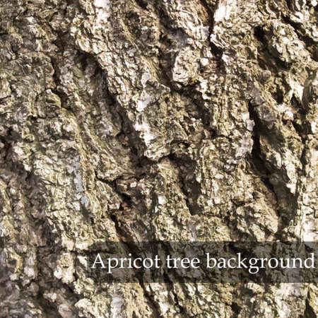 apricot tree: Wood texture. Apricot tree background. Vector illustration Illustration