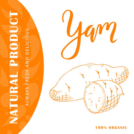 Vector vegetable element of yam. Hand drawn icon with lettering. Food illustration for cafe, market, menu design