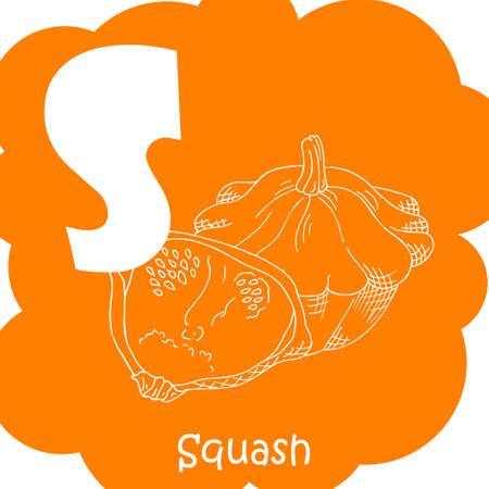 Alphabet pour les enfants avec des légumes. Lettre saine abc S-Squash Banque d'images - 78550054