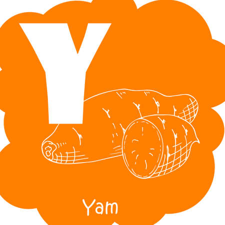 Vector vegetable alphabet for education. Illustration for kids. Letter Y for Yam.